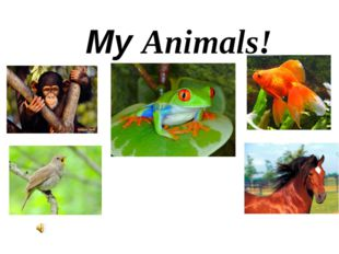 My Animals!