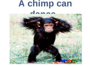 A chimp can dance.