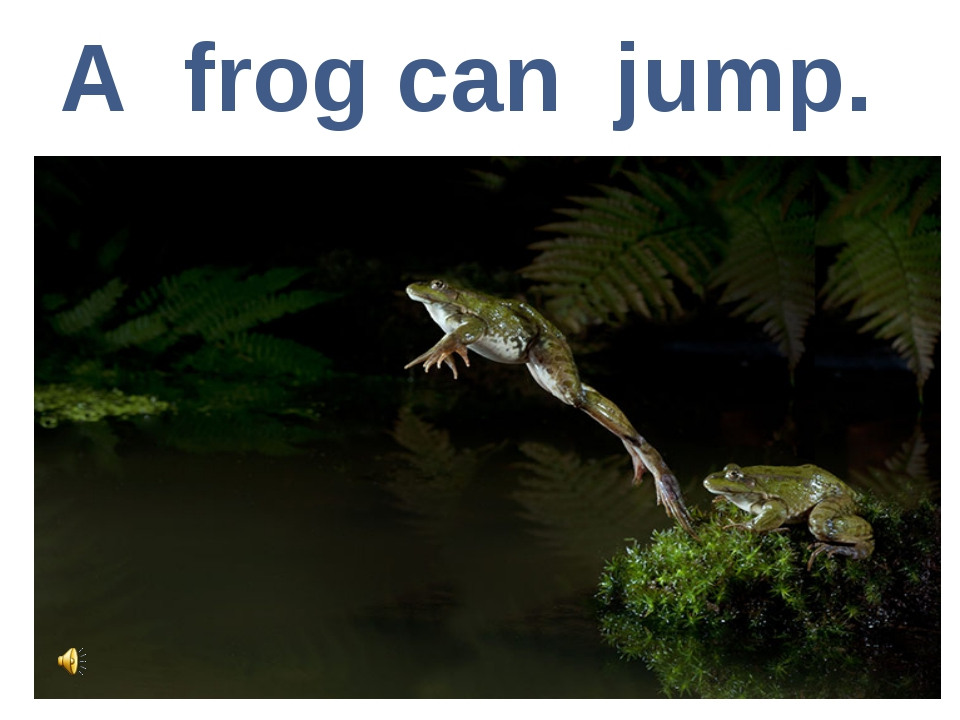 A frog can jump.