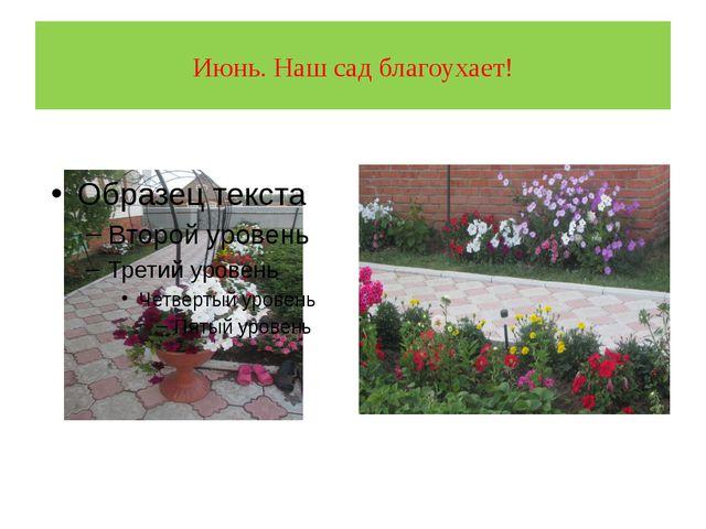 Июнь. Наш сад благоухает!