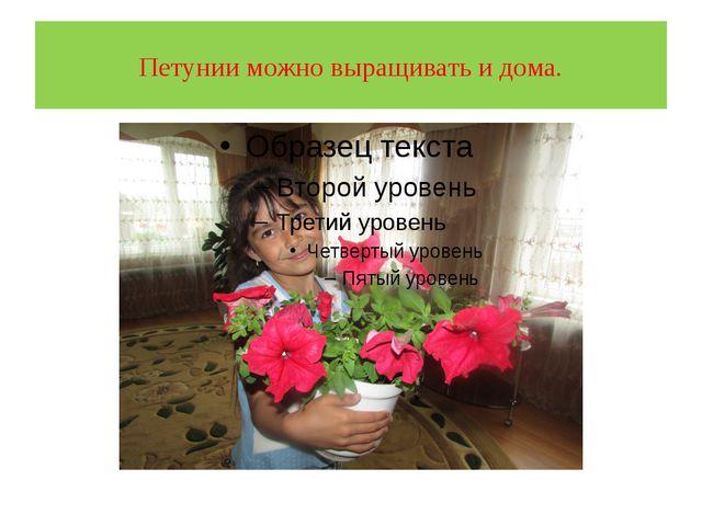 Петунии можно выращивать и дома.