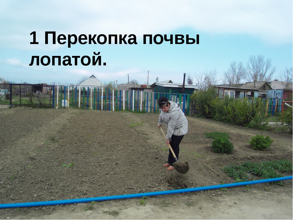 1 Перекопка почвы лопатой.