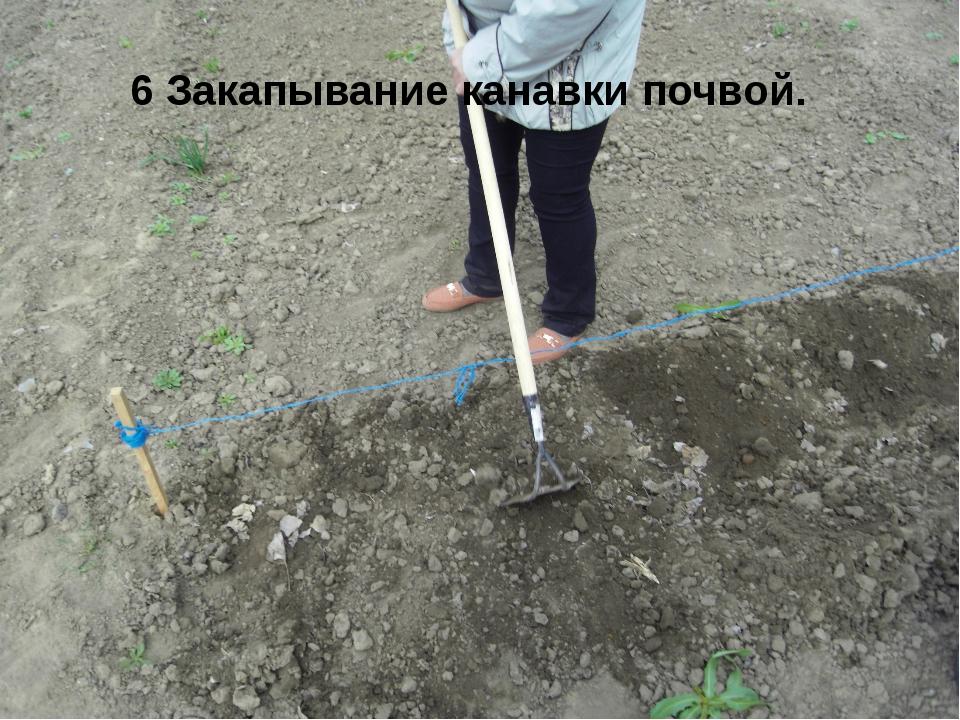 6 Закапывание канавки почвой.