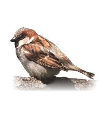 SparrowHouse