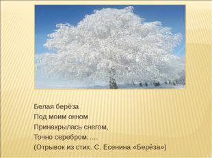 Белая берёза Под моим окном Принакрылась снегом, Точно серебром….. (Отрывок и