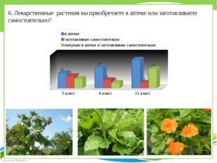 6. Лекарственные растения вы приобретаете в аптеке или заготавливаете самосто