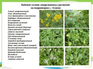Видовой состав лекарственных растений на территории с. Осинки Алтей лекарстве