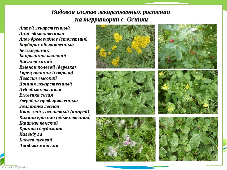 Видовой состав лекарственных растений на территории с. Осинки Алтей лекарстве...