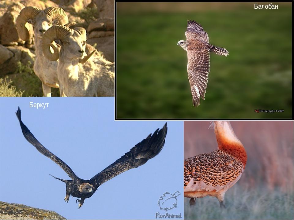 Животный мир области насчитывает 55 видов млекопитающихся, 180 видов птиц, 30...