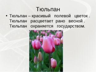 Тюльпан Тюльпан – красивый полевой цветок . Тюльпан расцветает рано весной .