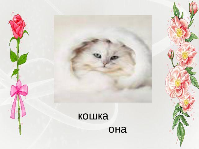 кошка она