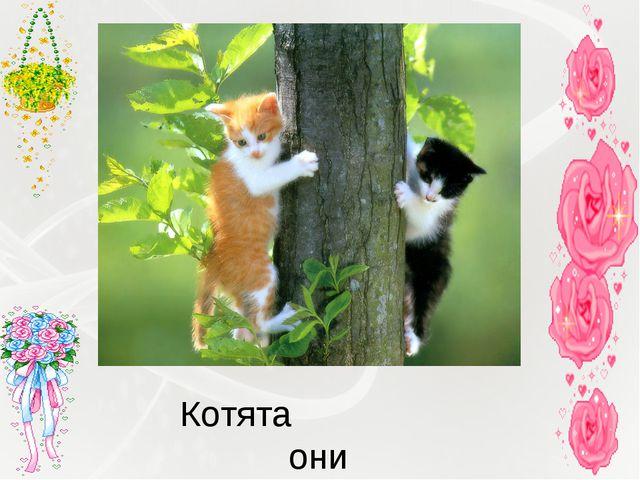 Котята они