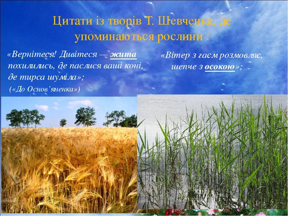 Цитати із творів Т. Шевченка, де упоминаються рослини : «Вернітеся! Дивітеся...
