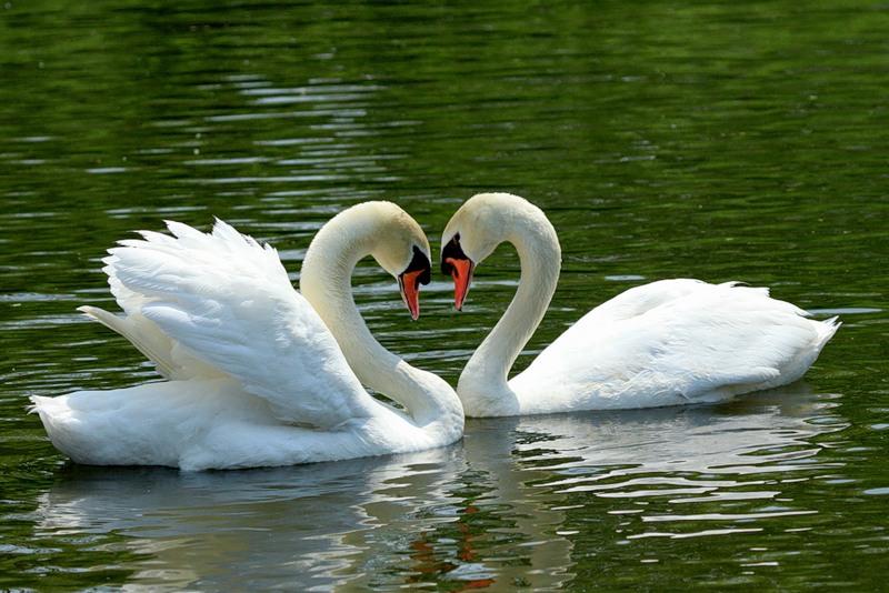 http://www.animalsglobe.ru/wp-content/uploads/2011/09/%D0%BB%D0%B5%D0%B1%D0%B5%D0%B4%D1%8C-7.jpg