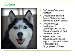 Собаки Собаки побывали в космосе Собаки уничтожили более 300 вражеских танков