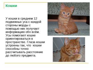 Кошки У кошки в среднем 12 подвижных уса с каждой стороны морды с помощью них