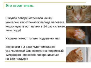Это стоит знать. Рисунок поверхности носа кошки уникален, как отпечаток пальц