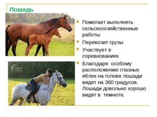 Лошадь Помогает выполнять сельскохозяйственные работы Перевозит грузы Участву