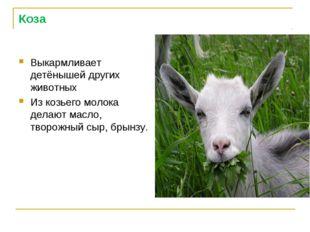 Коза Выкармливает детёнышей других животных Из козьего молока делают масло, т
