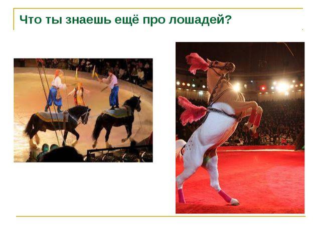 Что ты знаешь ещё про лошадей?