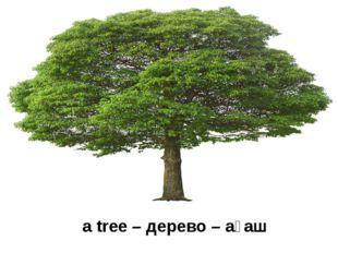 a tree – дерево – ағаш