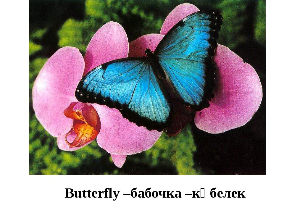 Butterfly –бабочка –көбелек