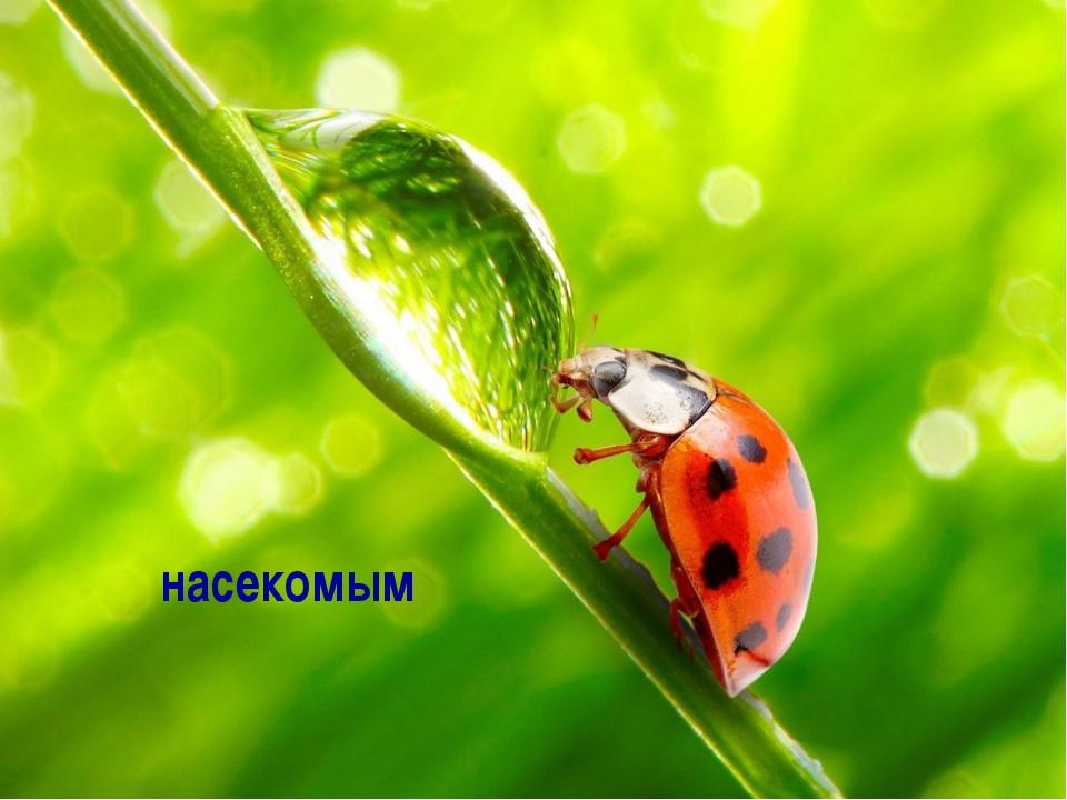 """""""Мультимедийные технологии в педагогическом процессе в ДОУ"""" насекомым """"Мульти..."""