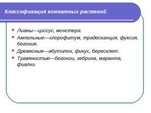 Классификация комнатных растений. Лианы—циссус, монстера. Ампельные---хлорофи