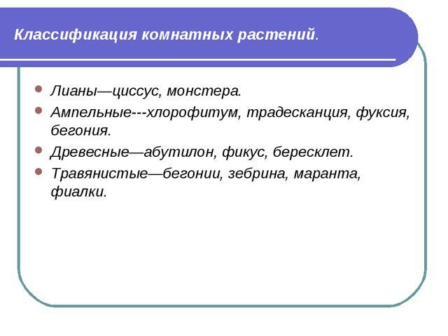 Классификация комнатных растений. Лианы—циссус, монстера. Ампельные---хлорофи...