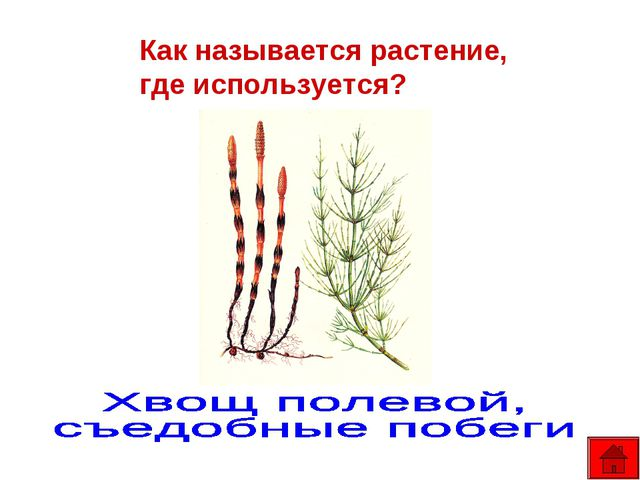 Как называется растение, где используется?