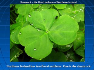 Shamrock – the floral emblem of Northern Ireland Northern Ireland has two flo