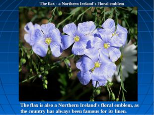 The flax - a Northern Ireland's Floral emblem The flax is also a Northern Ire