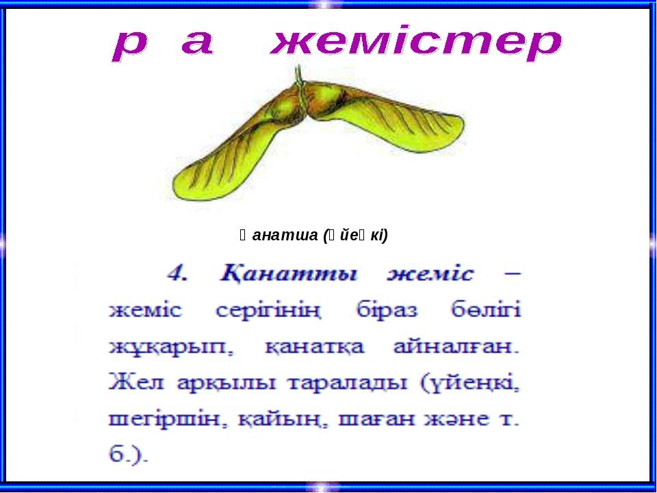 Қанатша (үйеңкі)