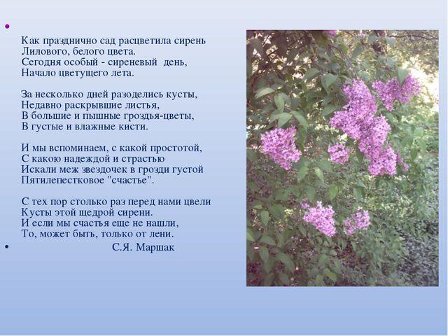 Как празднично сад расцветила сирень Лилового, белого цвета. Сегодня особый...