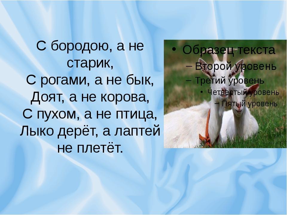 С бородою, а не старик, С рогами, а не бык, Доят, а не корова, С пухом, а не...