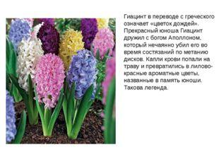 Гиацинт в переводе с греческого означает «цветок дождей». Прекрасный юноша Ги