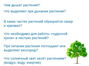 Чем дышат растения? Что выделяют при дыхании растения? В каких частях растени