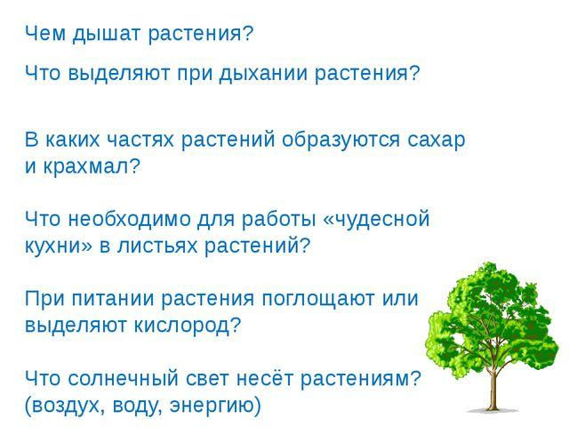 Чем дышат растения? Что выделяют при дыхании растения? В каких частях растени...