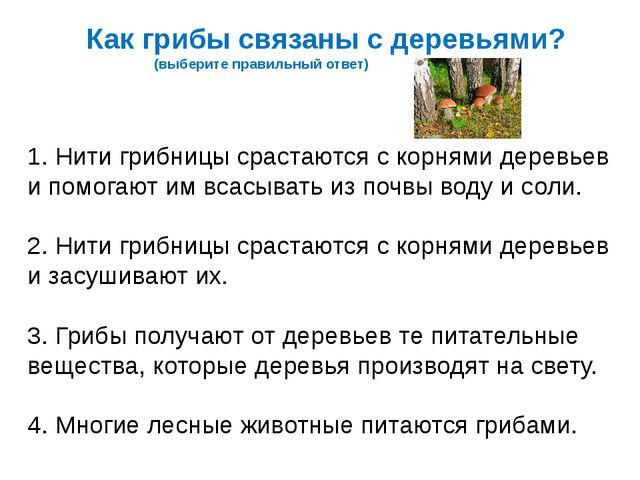 Как грибы связаны с деревьями? (выберите правильный ответ) 1. Нити грибницы с...