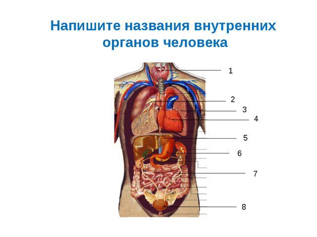 Напишите названия внутренних органов человека 1 2 3 4 5 6 7 8