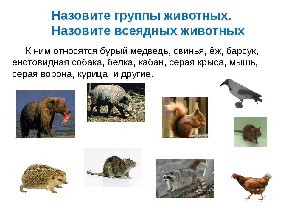 Назовите группы животных. Назовите всеядных животных К ним относятся бурый ме...