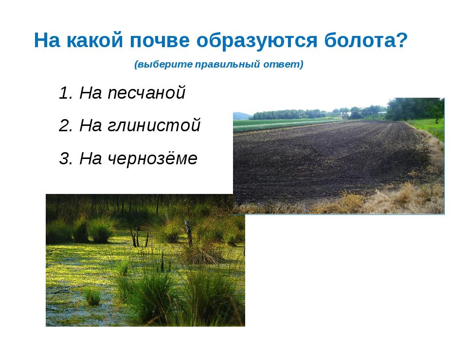 На какой почве образуются болота? (выберите правильный ответ) 1. На песчаной...