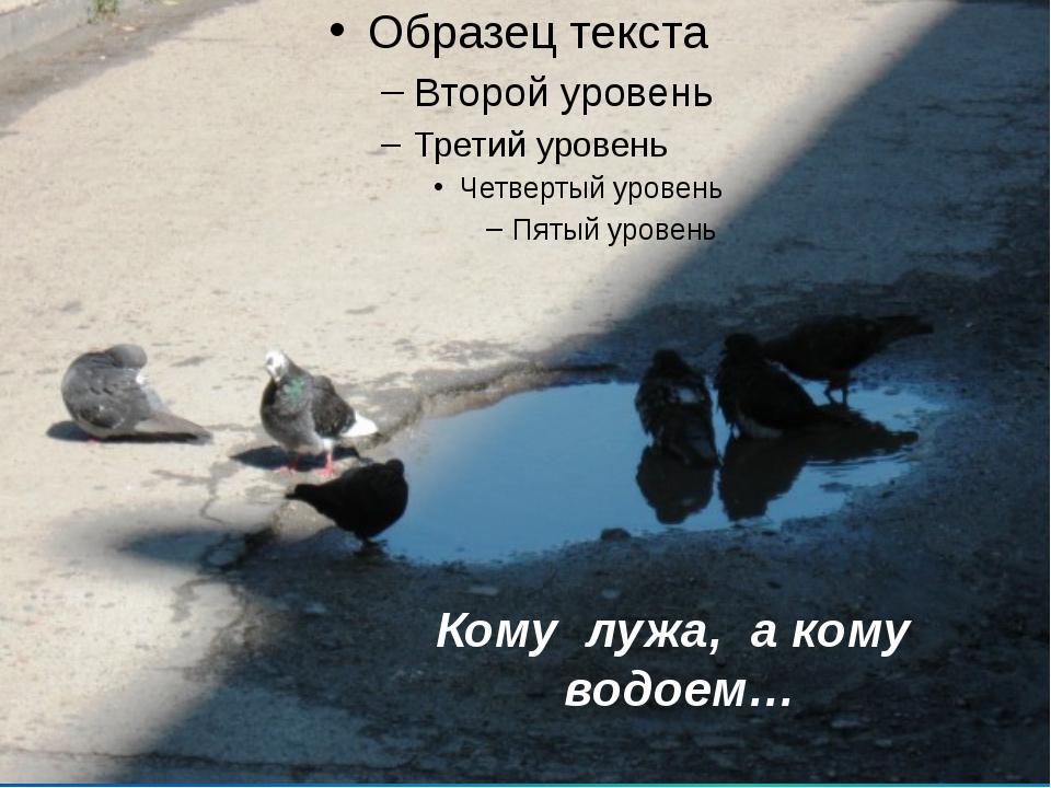 Кому лужа, а кому водоем…