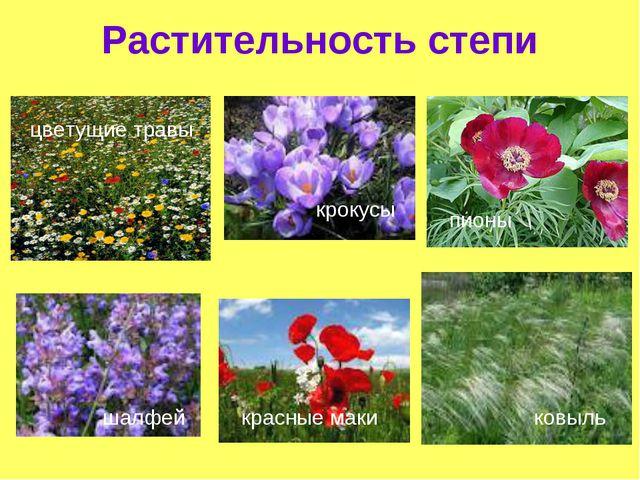 Растительность степи пионы красные маки крокусы шалфей ковыль цветущие травы