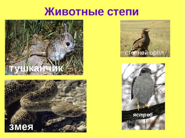 Животные степи степной орёл ястреб