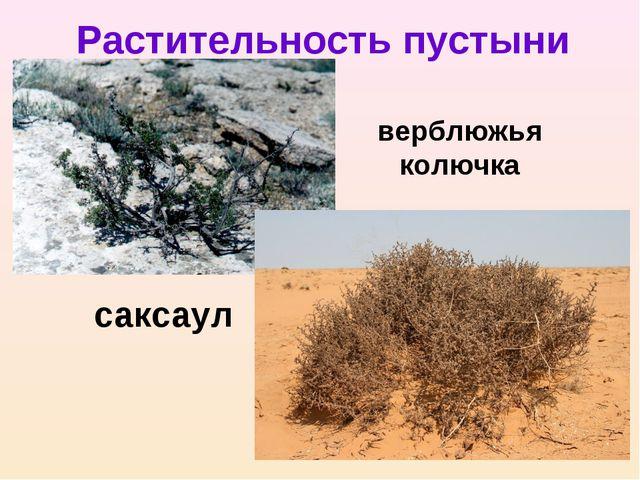 верблюжья колючка Растительность пустыни