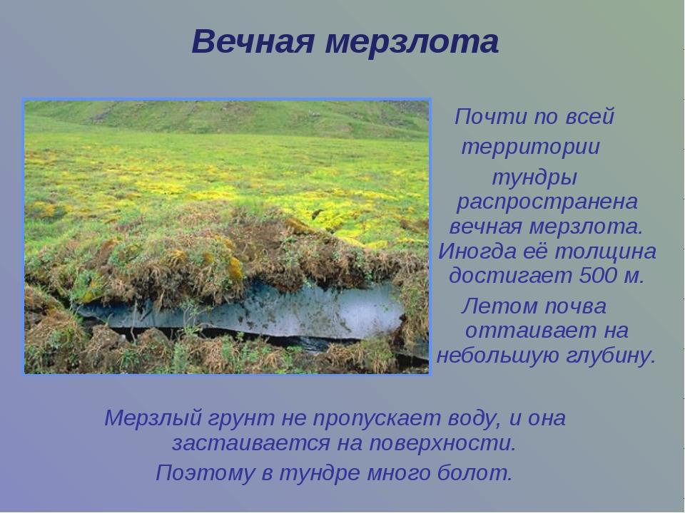 Мерзлый грунт не пропускает воду, и она застаивается на поверхности. Поэтому...