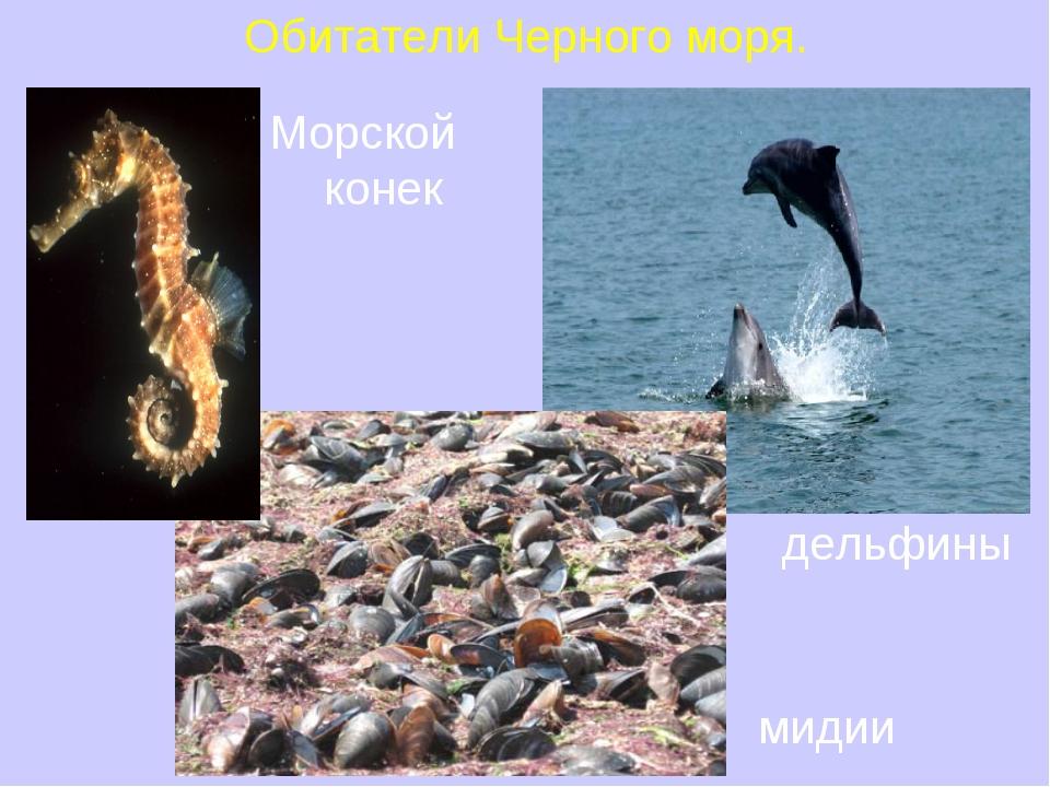 Обитатели Черного моря. мидии Морской конек дельфины