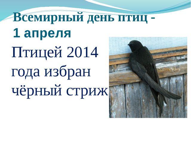 Всемирный день птиц - 1 апреля Птицей 2014 года избран чёрный стриж