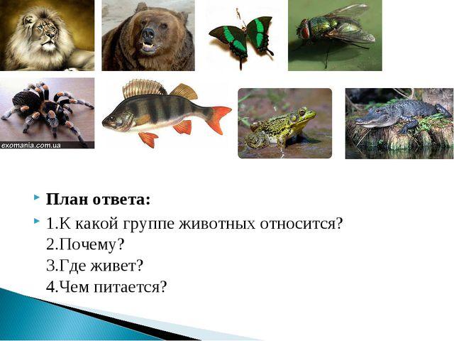 План ответа: 1.К какой группе животных относится? 2.Почему? 3.Где живет? 4.Че...